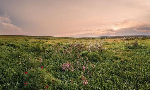 wildflower community by Minto.